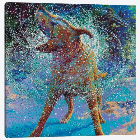 Swimmin' In Ice Canvas Print #IRS79} by Iris Scott Canvas Art