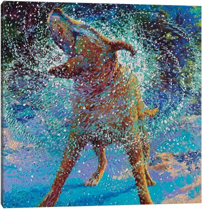 Swimmin' In Ice Canvas Art Print