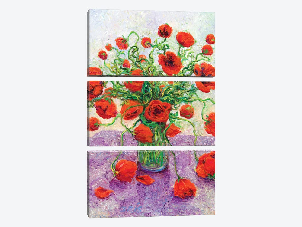 The Color Poppy by Iris Scott 3-piece Canvas Wall Art