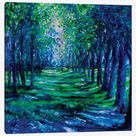 Blue Evergreens Canvas Print #IRS8} by Iris Scott Art Print