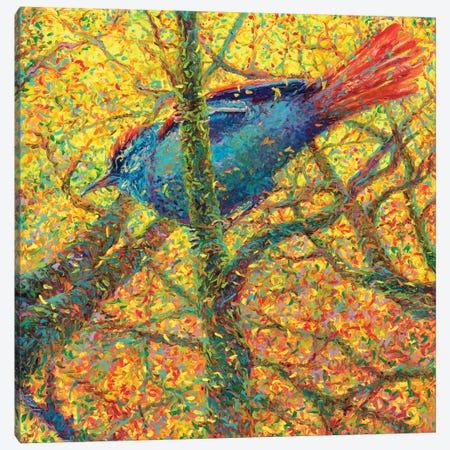 Yellow Bluebird Canvas Print #IRS97} by Iris Scott Canvas Print