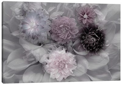 Dahlia Dream Canvas Art Print