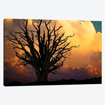 One Imaginary Evening Canvas Print #ISL206} by Chris Lord Canvas Wall Art