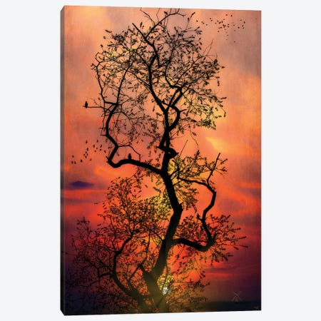 The Last Tree In The Forest Canvas Print #ISL212} by Chris Lord Canvas Artwork