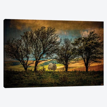 Autumn Up On The Downs Canvas Print #ISL214} by Chris Lord Canvas Print