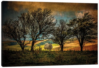 Autumn Up On The Downs Canvas Art Print