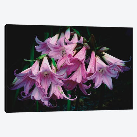 Garden Delight Canvas Print #ISL63} by Chris Lord Canvas Print