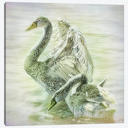 The Ugly Ducklings Canvas Print #ISL86} by Chris Lord Canvas Wall Art