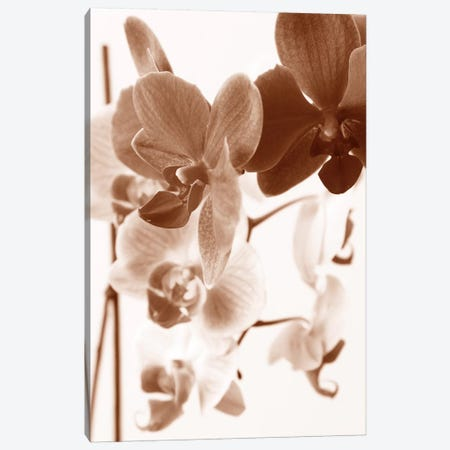 Dreamy Orchids I Canvas Print #ISZ11} by Ily Szilagyi Canvas Art