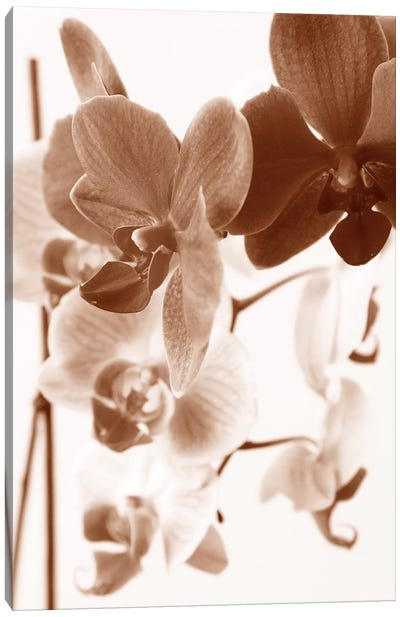 Dreamy Orchids I Canvas Art Print