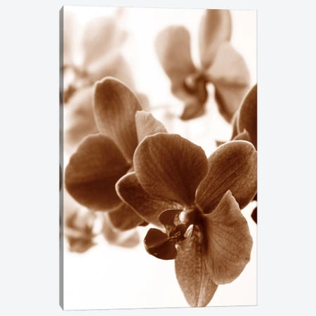 Dreamy Orchids II Canvas Print #ISZ12} by Ily Szilagyi Canvas Art