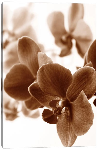 Dreamy Orchids II Canvas Art Print