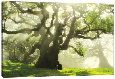 Big And Bright Canvas Art Print