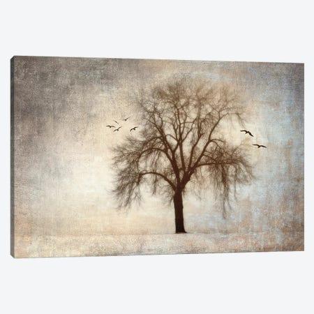 Treehouse Canvas Print #ISZ9} by Ily Szilagyi Canvas Art Print