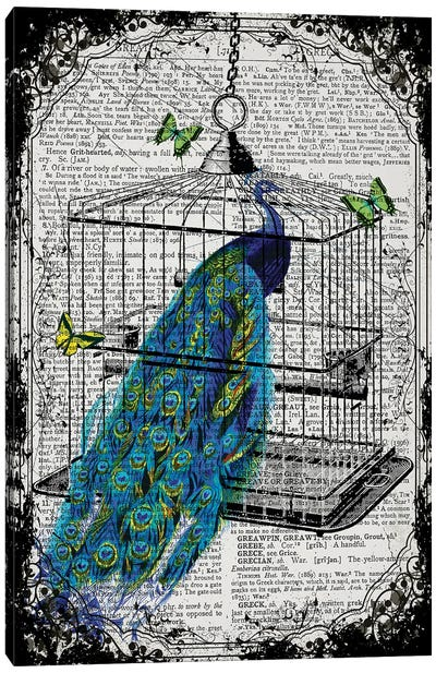 A Peacock In A Bird Cage Canvas Art Print