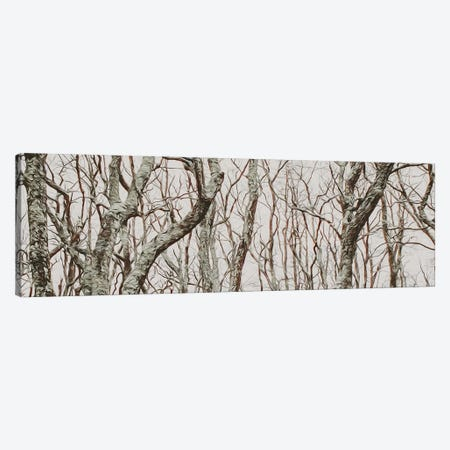 Curved Tree Branches In The Forest Canvas Print #IVG117} by Ievgeniia Bidiuk Art Print