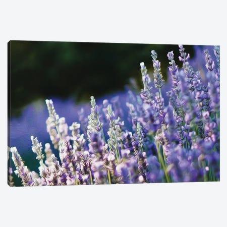 Blooming English Lavender Canvas Print #IVG219} by Ievgeniia Bidiuk Canvas Art Print