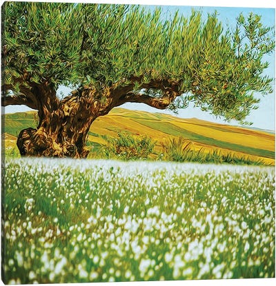 Beautiful Landscape Of An Old Olive Tree On The Background Of Fields Canvas Art Print