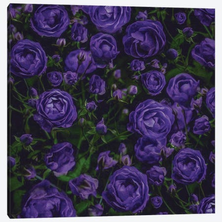 Abstract Background From A Bush Of Blue Roses Canvas Print #IVG278} by Ievgeniia Bidiuk Canvas Print