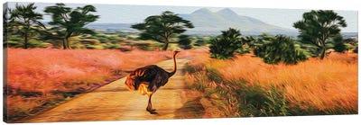African Ostrich In The Wild Canvas Art Print