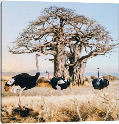 Ostriches Of The Wild African Nature Canvas Art Print