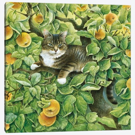 Gemma In The Apple Tree Canvas Print #IVR16} by Ivory Cats Canvas Art Print