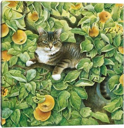 Gemma In The Apple Tree Canvas Art Print
