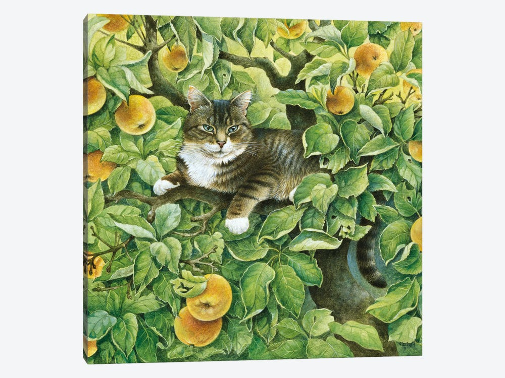 Gemma In The Apple Tree by Ivory Cats 1-piece Canvas Art
