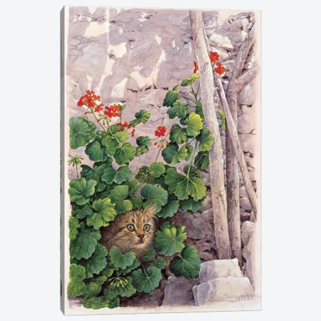 Katia Greek Cat In Geraniums Canvas Print #IVR21} by Ivory Cats Canvas Print