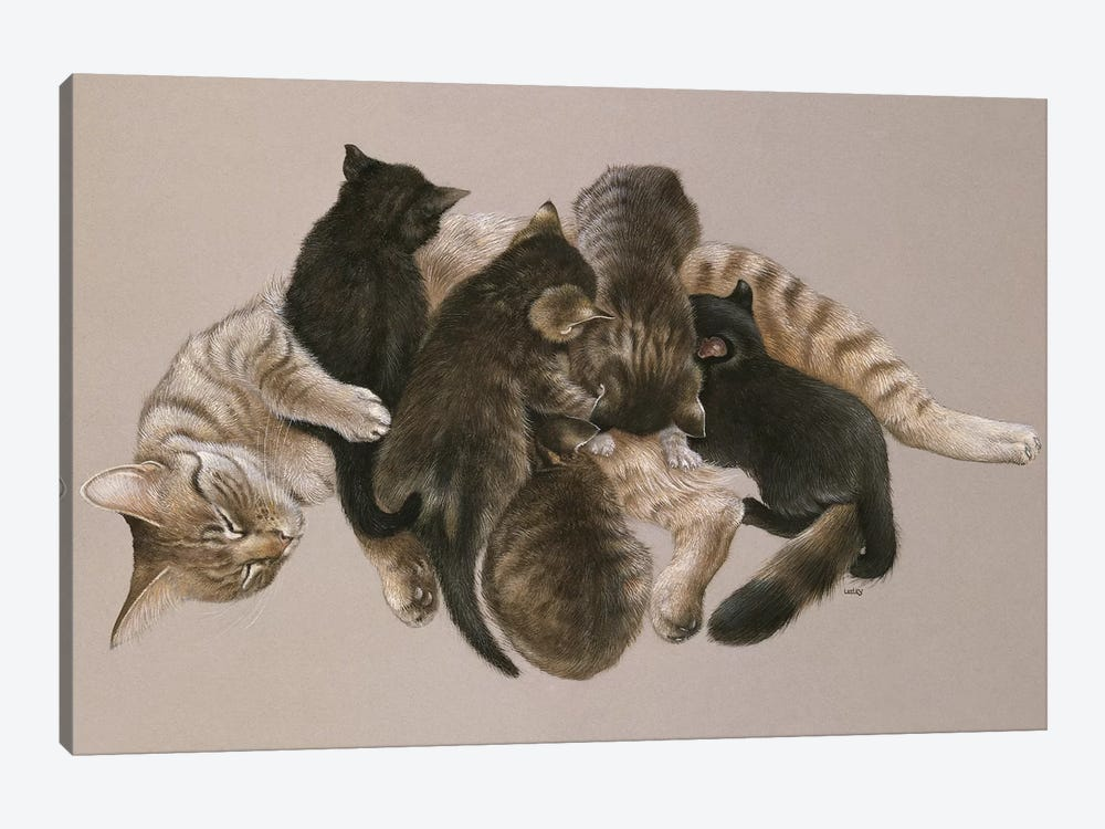Muppet Nursing Her Kittens by Ivory Cats 1-piece Canvas Print