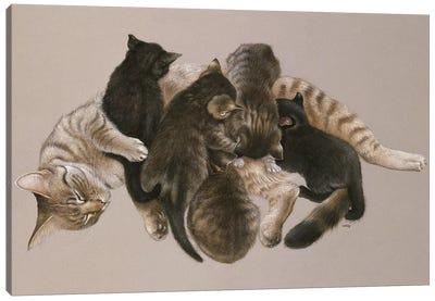 Muppet Nursing Her Kittens Canvas Art Print