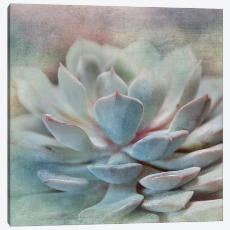 Pastel Succulent I Canvas Print #IWE12} by Irene Weisz Canvas Art