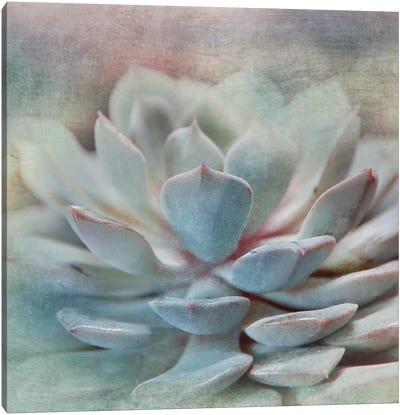 Pastel Succulent I Canvas Art Print