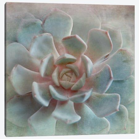 Pastel Succulent II Canvas Print #IWE13} by Irene Weisz Canvas Wall Art