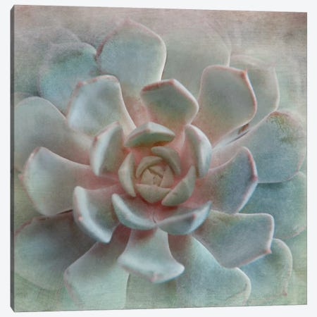 Pastel Succulent II Canvas Print #IWE13} by Irene Weisz Canvas Wall Art