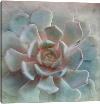 Pastel Succulent II Canvas Art Print
