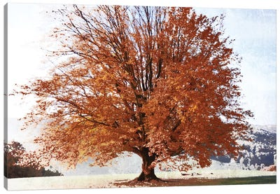Season Of Fall Canvas Art Print