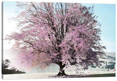 Season Of Spring Canvas Art Print