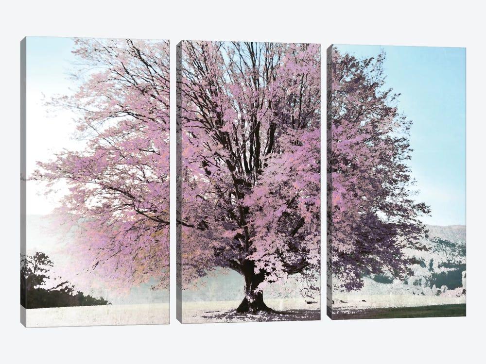 Season Of Spring by Irene Weisz 3-piece Canvas Print