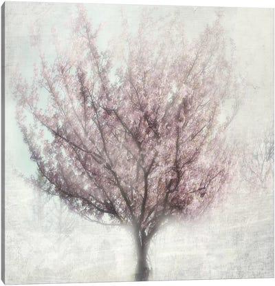 Blossom Of Spring I Canvas Print #IWE1