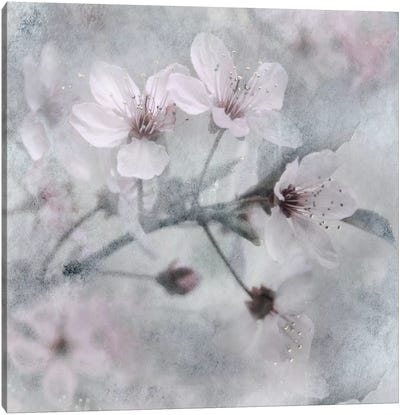 Spring Melody I Canvas Art Print