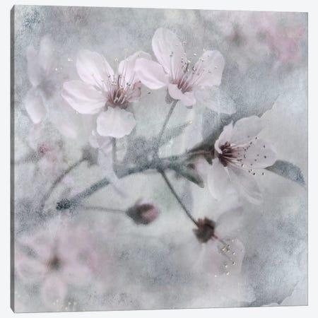 Spring Melody I Canvas Print #IWE20} by Irene Weisz Canvas Print