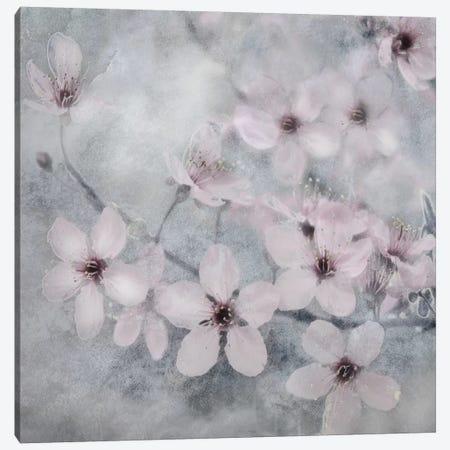 Spring Melody II Canvas Print #IWE21} by Irene Weisz Art Print