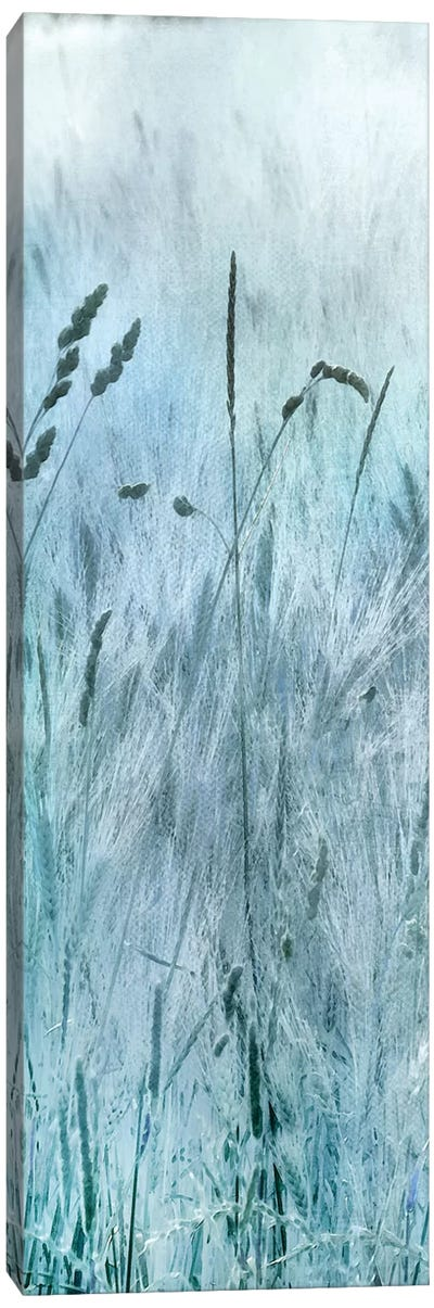 Blue Field Forever I Canvas Art Print