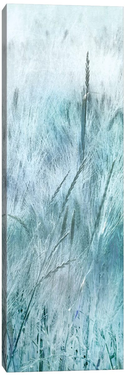 Blue Field Forever III Canvas Art Print