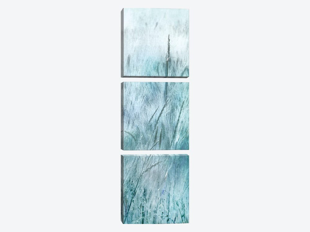 Blue Field Forever III by Irene Weisz 3-piece Canvas Print