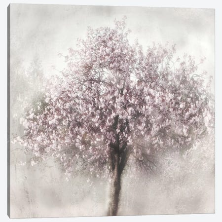Blossom Of Spring II Canvas Print #IWE2} by Irene Weisz Art Print