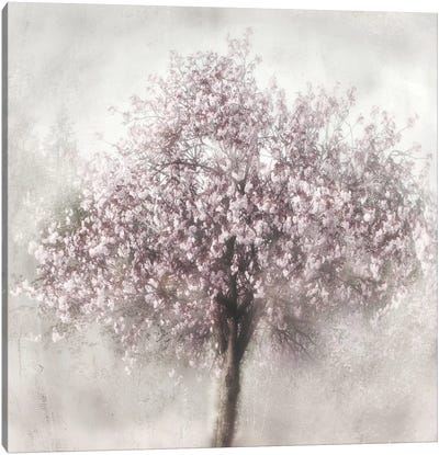 Blossom Of Spring II Canvas Art Print