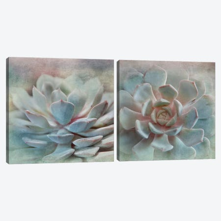 Pastel Succulent Diptych Canvas Print Set #IWE2HSET001} by Irene Weisz Canvas Artwork