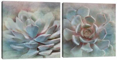 Pastel Succulent Diptych Canvas Art Print